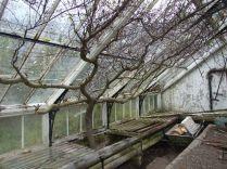 Greenhouse 3 -April 2012 - TC