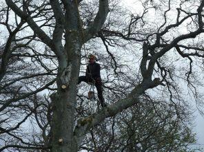 Tree surgery 1 - April 2012 - TC
