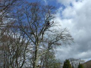 Tree Surgery 2 - April 2012 - TC