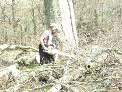 Tree Surgery 3 - April 2012 - TC