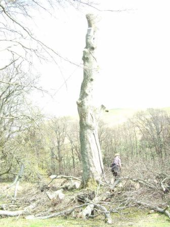 Tree Surgery 4 - April 2012 - TC