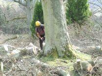 Tree Surgery 5 - April 2012 - TC