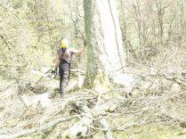 Tree surgery 6 - April 2012 - TC