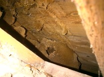 Honeycomb 3 -20121023