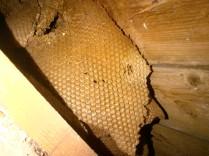 Honeycomb 6 -20121023