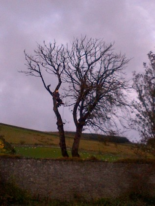 Tree Surgery 10 -20121020