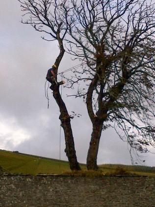 Tree Surgery 14 -20121020