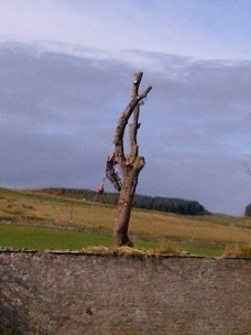 Tree Surgery 17 -20121020