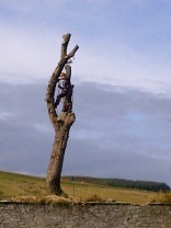 Tree Surgery 19 -20121020
