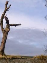 Tree Surgery 22 -20121020