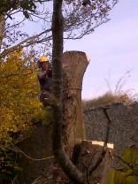 Tree Surgery 24 -20121020