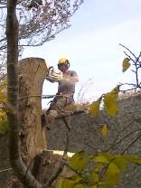 Tree Surgery 25 -20121020