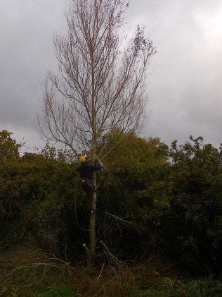 Tree Surgery 28 -20121020
