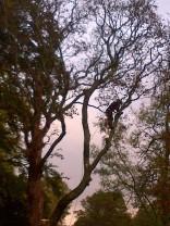 Tree Surgery 3 -20121020