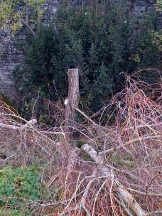 Tree Surgery 30 -20121020