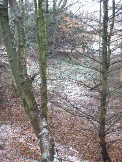 Snowdrops 2 - 16032013