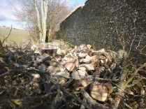 Timber processing 3 - 02032013