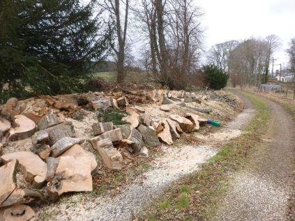 Timber processing 6 - 03032013