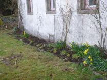 Front of house - flower bed - 21042013