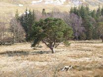 View of pine tree - 06042013