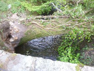 Fallen tree 1 - 25052013