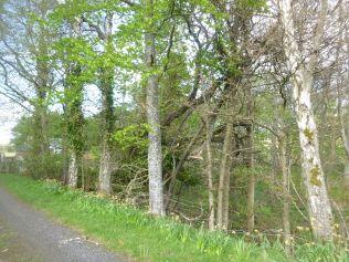Fallen tree 3 - 25052013