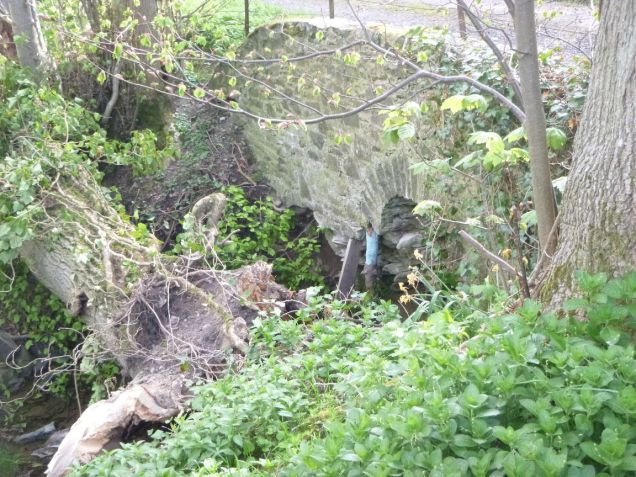 Fallen tree 5 - 25052013