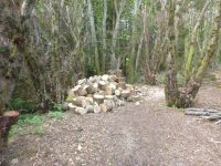 Log pile in Yew Avenue - 22052013