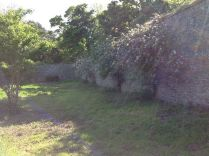 Back wall fruit trees & sun - 020613