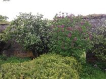Blossom by flower garden - 040613