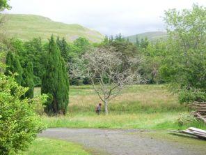 Dead tree felling 1 - 23062013