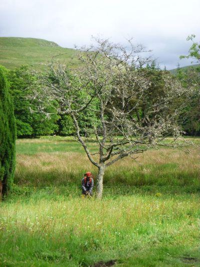 Dead tree felling 7 - 23062013