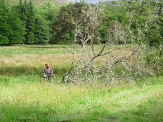 Dead tree felling 8 - 23062013