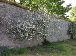 Fruit blossom - 020613