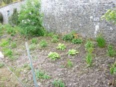 Herb border 1 - 21062013