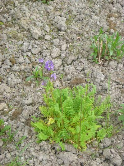 Herb border 2 - 130613