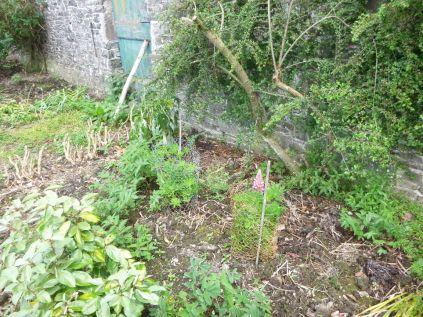 Herb border 2 - 21062013