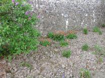 Herb border 3 - 090613
