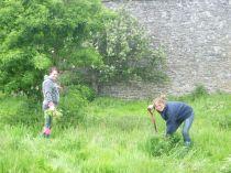 Meg & Helen pulling ragwort 3 - 150613