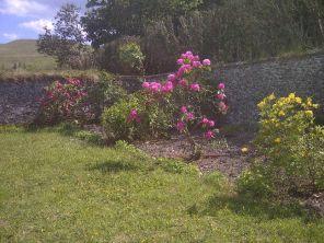Pink Rhod - 08062013