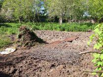 SWG - dug over - 020613