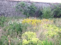 Flower garden - 17072013