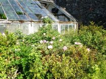 Flower garden - pink roses - 06072013