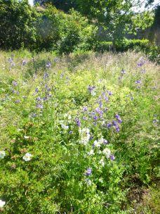 Flower garden - purples - 06072013