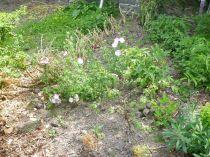 Herb border 1 - 12072013