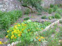 Herb border 2 - 17072013