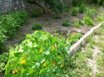 Herb border 3 - 12072013