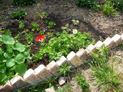 Herb border 4 - 12072013