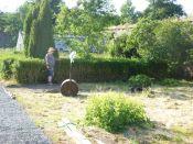 Meg trimming the hedge - 07072013