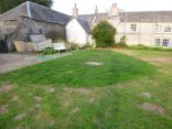 New grass on back lawn - 17072013